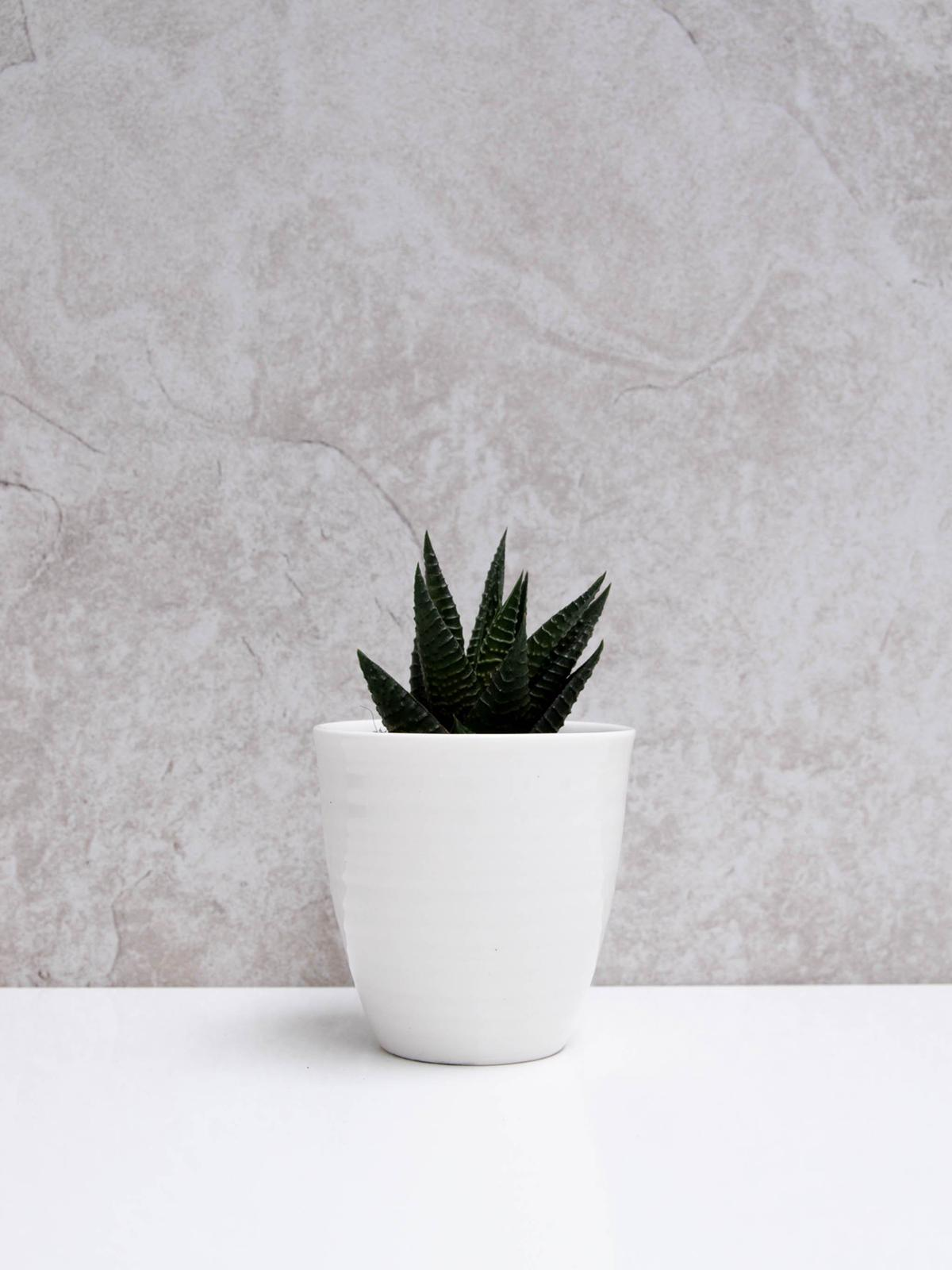 Chalk Porcelain Beaker